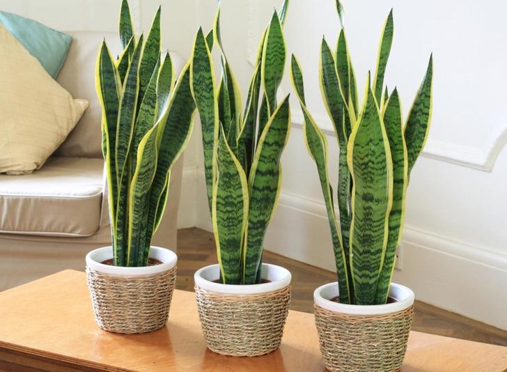 tres macetas sobre una mesa Plantas-hogar-reformas-baños-sevilla